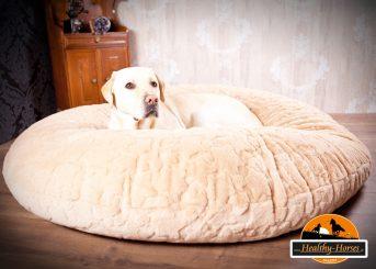 Hundekissen - Luxus pur für den Vierbeiner