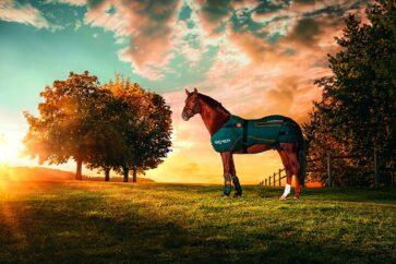 Bemer Horse Therapie Set